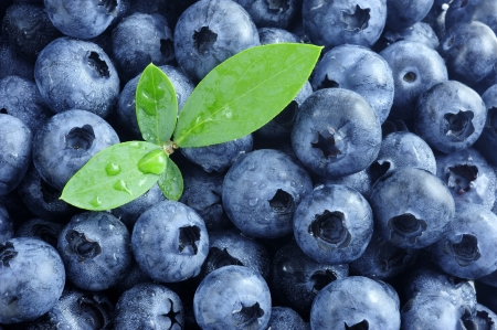 果実、ブルーベリーの葉