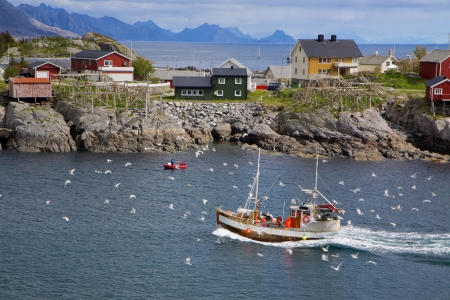 Fishing boat surrounded by seagulls making its way across Reinefjorden on Lofoten islands in Norway