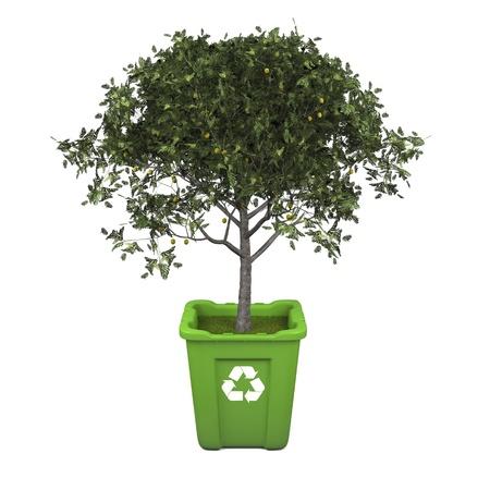 papelera de reciclaje: Reciclaje de concepto con el �rbol de la fruticultura en la papelera de reciclaje verde