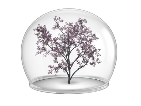 quarantine: Flowering tree inside glass bowl, concept of environmental protection and conservation, isolated on white background