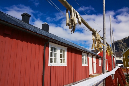 fishing hut: Traditional fishing hut and dried stock fish in Nusfjord on Lofoten islands, Norway Editorial