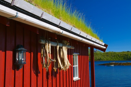 rorbu: Typical norwegian rorbu hut with sod roof and drying stock fish on Lofoten islands Editorial