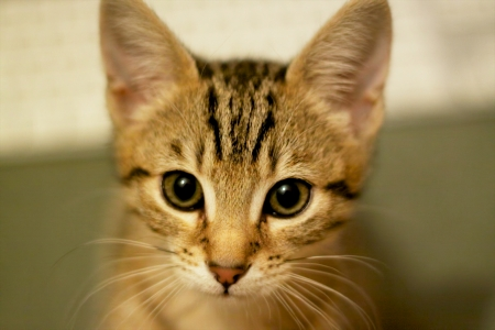 endearing: Cute young kitten with big eyes Stock Photo