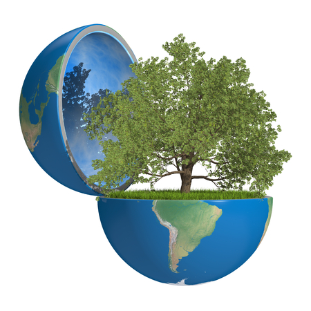 Oak tree growing inside opened planet Earth, isolated on white background, concept of ecology. Elements of this image furnished by NASA photo