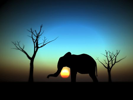 An image of an elephant silhouette with a African sky background. Stock Photo - 1150603