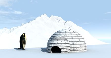 A penguin by an igloo home. Stock Photo