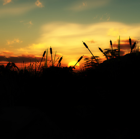 An image of a sunset from the point of view of some grass. Stock Photo - 1489298