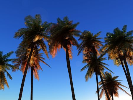 would: An image of some palm trees against a clear cloudless tropical daylight sky, it would be a good conceptual image representing going on a tropical holiday.