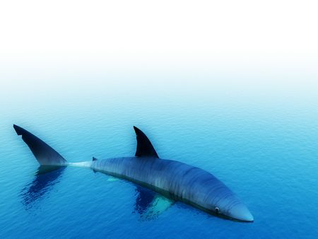 predictor: An image of a shark swimming in the water.