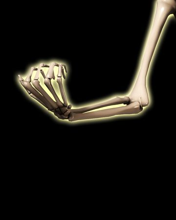 A Skeletal Hand And Arm That Could Be Used For Medical Concepts ...