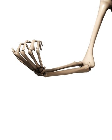 human bone: A skeletal hand and arm that could be used for medical concepts.