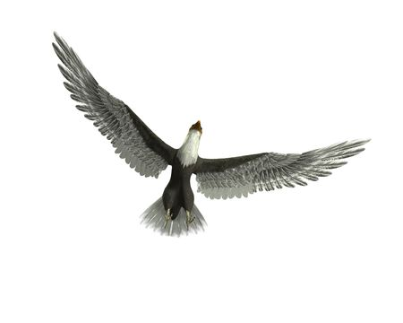predictor: An eagle flying with its wings outstretched. Stock Photo