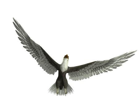 Un �guila volando con las alas abiertas. Foto de archivo - 3834704