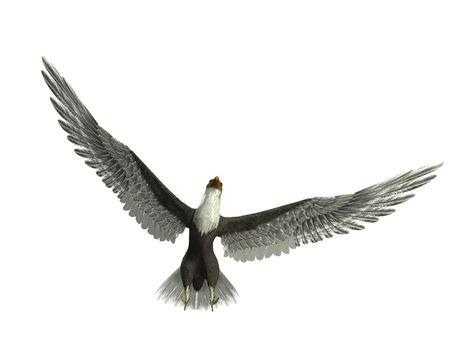 Un águila volando con las alas abiertas. Foto de archivo - 3834704