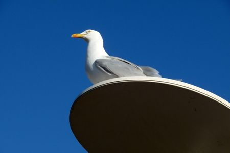 beck: A seagull that is perched on a lamppost. Stock Photo