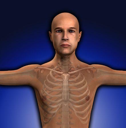 ribcage: X Ray of a mans torso region.