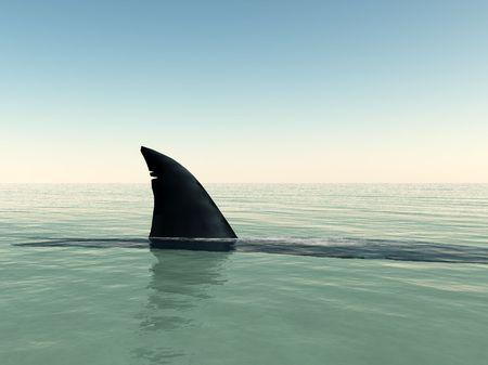 상어가 물 위에 떠올랐다.
