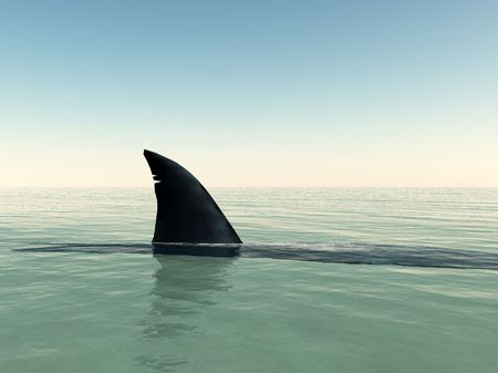 sharks: Shark that has surfaced on the water. Stock Photo