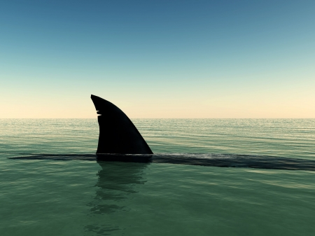 Shark that has surfaced on the water. Stock Photo