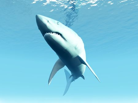 chordata: A shark that is swimming under the surface of the sea.
