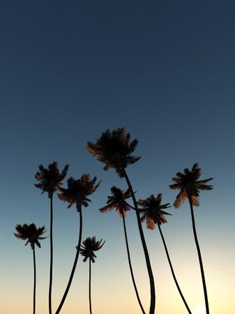 tress: A set of palm tress with a sky background.