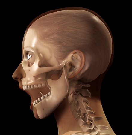 profile view: A profile view of a see through female head.  Stock Photo