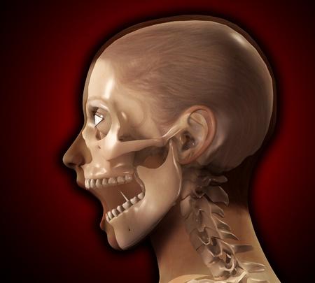 A profile view of a see through female head.  photo