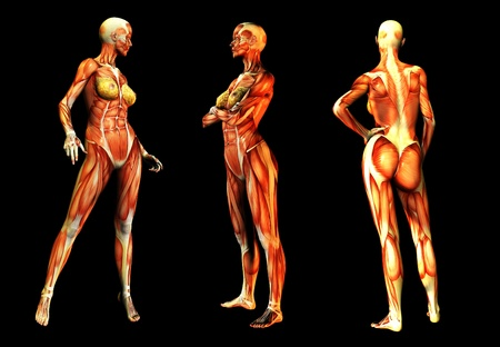 Medical image of some women in poses without skin.    photo