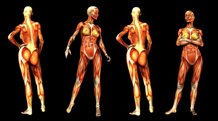 Medical image of some women in poses without skin. Stock Photo - 8420558