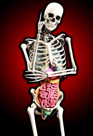wnętrzności: Anatomiczny szkielet w ułożenia z jej wnętrzności narażone.