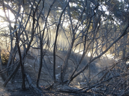 charred: Epping Forest after a major forest fire. Editorial