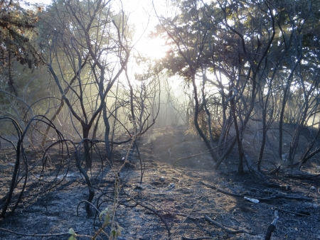 Epping Forest after a major forest fire.