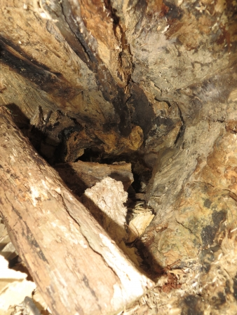 Close up view of the inside of a tree that has rotted Stock Photo
