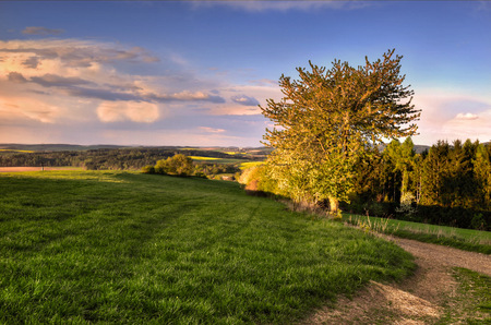 of irradiated: Tree on grassland irradiated latest April s sun rays