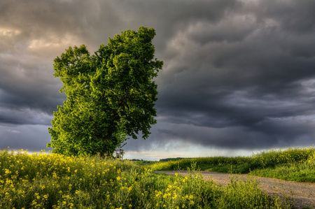 ominously dark sky over the landscape with a lime tree photo