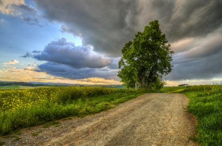 dirt road with old linden tree before the storm photo