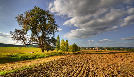 The tree above the village in a field sown