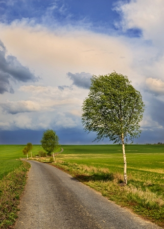 highroad: August scenery with a rural road lined with birch trees Stock Photo