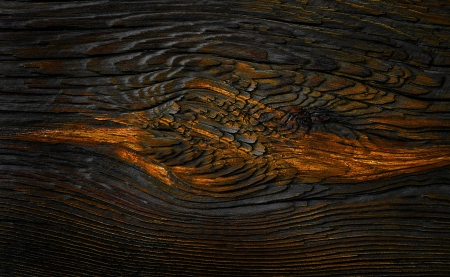Wood texture,abstract yellow background photo
