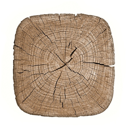 cross section: Cross section of tree trunk showing growth rings on white background