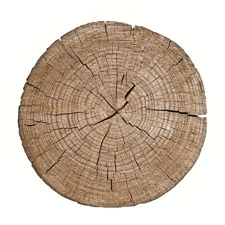 白い背景の上の成長リングを示す木の幹の断面図