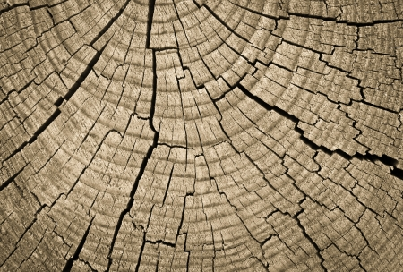 Cross section of tree trunk showing growth rings photo