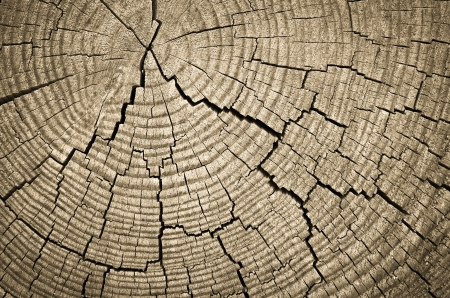 Cross section of tree trunk showing growth rings