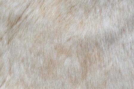 white fur: Fondo de textura de pelaje blanco  Foto de archivo