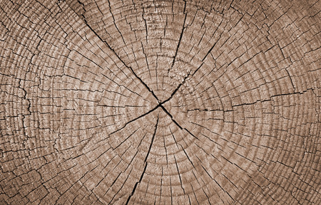 Cross section of tree trunk showing growth rings,texture background Stockfoto