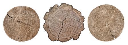 白い背景の上の成長リングを示す木の幹の断面設定 写真素材