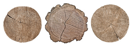 Cross section of tree trunk showing growth rings on white background, set Imagens