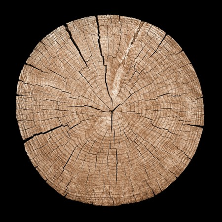 Cross section of tree trunk showing growth rings on black background Zdjęcie Seryjne