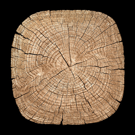 Cross section of tree trunk showing growth rings on black background photo