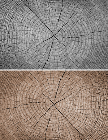 Cross section of tree trunk showing growth rings,texture background photo